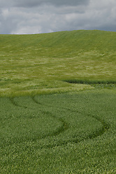 Tire tracks run through a field in the Palouse, Washington.