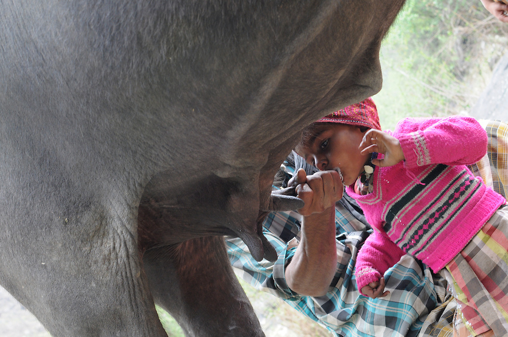 Karim, 4 years old, gets his milk straight from the source.
