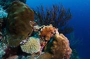 Coral Reef Diversity<br /> BONAIRE, Netherlands Antilles, Caribbean