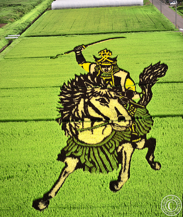 Rice field Art or Tambo Art.<br /> In northern Japan the small village of Inakadate plants five different varieties of rice all different colours to produce.   &quot;Rice field art&quot;<br /> <br />  This is an annual event and attracts many thousands of tourists. Every year in autumn they have a different subject matter to be viewed. <br /> <br />  The design is done by an artist and then in a computer the design is calculated and adjusted to what it would look like when it is viewed from the town hall watch tower. Then the design is marked out in the rice fields.