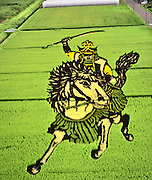 Rice field Art or Tambo Art.<br />