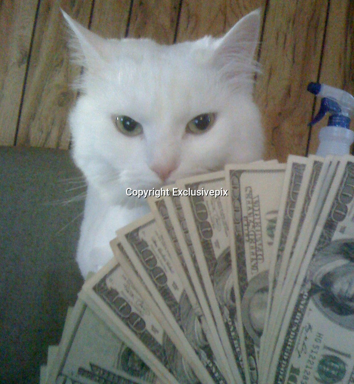 cats with cash<br /> Cats - you either love them or cat them. So how about in these hard times do people think about cats with cash. What started out as a bit of fun has turned in to a bit of a trend around the world now every cat owner wants to show how rich their puss is. The Cashcats website is literally packed with moggies packing heat along with piles of bank notes. And some of them are covered in literally hundreds that should make non cat lovers change their feelings about the wealthy felines. No, we doubt it too.<br /> &copy;Exclusivepix