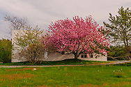 Cherry Trees, Modern Home, Wainscott, Long Island, New York
