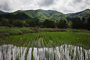 Monsoon clouds approaching the rice fields surrounding Pak ok, northern Thailand, where the first case of surrogacy was recorded.<br /> Lom Sak, Petchabun province, Thailand. Aug 25 2014<br /> Credit : Giorgio Taraschi for The New York Times