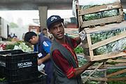 CEAGSP est le marché de gros de Sao Paulo (Brésil). Ici on voit le hangar où se vendent les légumes verts.