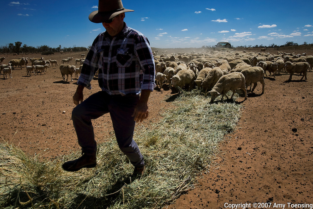 HATFIELD, NSW, AUSTRALIA - FEBRUARY 9: John Butler feeds his sheep February 9, 2008 in Hatfield New South Wales, Australia. Normally farmers in this region do not need to hand feed their livestock hay and instead rely on the rain to grow natural grazing land. However, the longterm drought has forced Butler and many other farmers to buy feed, costing about $20,000 Australian (about $13,000 U.S.) for just three months, a practice that is not sustainable. The Murray-Darling Basin of Australia has been plagued with severe drought since the late 1990's and many growers and policy makers are being forced to work on implementing more efficient irrigation systems. (Photo by Amy Toensing / Reportage by Getty Images).. _________________________________<br />
