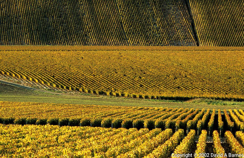 Vineyard; Chablis; Yonne; Burgundy; France; autumn
