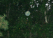A large pale white translucent orb floating up in the trees during daylight, with energy tendrils encircling it's perimeter.