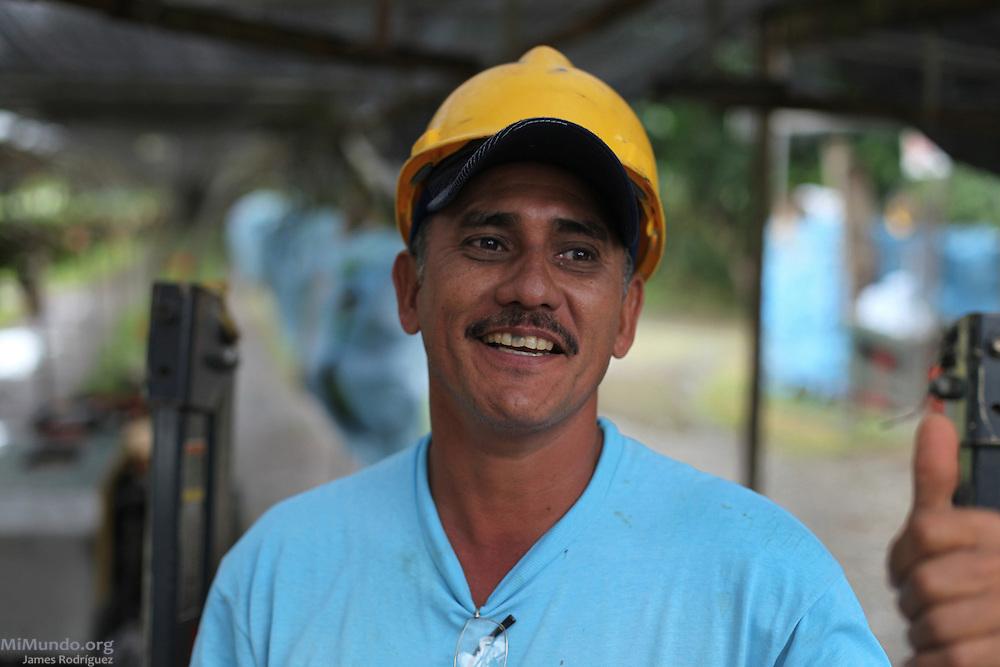 Bernabé Ibarra, member of COOBANA, drives a cart that pulls banana cluster along a rail into the processing plant. COOBANA, Finca 51, Changuinola, Bocas del Toro, Panamá. September 3, 2012.