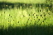 Grass in a pastures at Northern Portugal