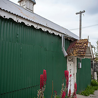 The facade of a traditional corrugated metal home with lupine growing in front in Ushuaia, Argentina.