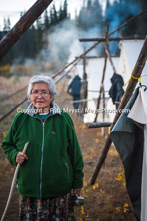 Mayo, Yukon Territory, Canada, September 2014. Betty Lucas, a First Nation elder from Mayo is ready to cut the fish at the fishing camp.  Band members of the First Nation of NaCho Nyak Dun return to their traditional fishing spot below the Fraser Falls on the Stewart River to fish for Whitefish and Chum . The nation has agreed to not fish salmon for the duration of a full life cycle of the declining species. So few salmon have reached their traditional spawning grounds that they are threatened by extiction.  Photo by Frits Meyst / MeystPhoto.com
