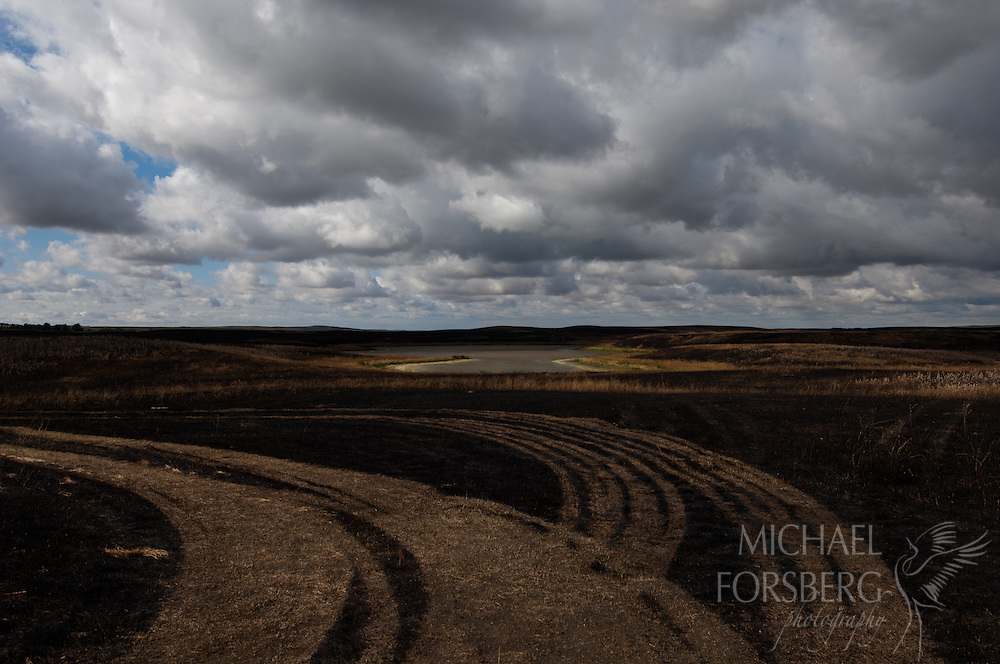 Prairie pothole region - Missouri coteau<br /> <br /> Tracks left by equipment after a prairie burn around a pothole lake at Lostwood NWR.
