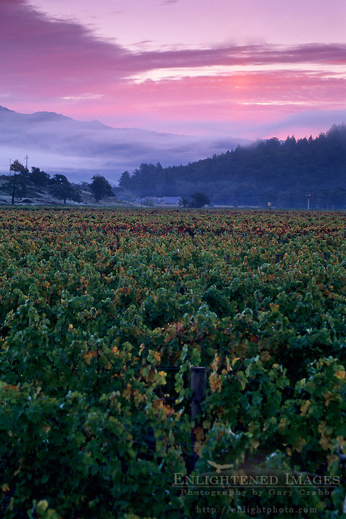 Clouds and fog at sunrise over vineyards near Oakville, Napa County, California