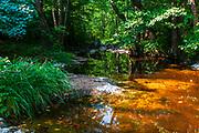 Small river in Strandzha Mountains