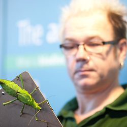 London, UK - 2 January 2014:  a zookeeper holds a stick insect called Jungle Nymph during the annual animal stocktake at ZSL London Zoo. The compulsory count is required as part of ZSL London Zoo's zoo license and the results are logged into the International Species Information System (ISIS), where the data is shared with zoos around the world and used to manage the international breeding programmes for endangered animals.
