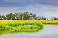 Vibrant green marsh grass lines the edge of a creek in a coastal salt marsh.