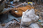 "A dog carcus lays amidst the rubble of an abandoned home where blocks of abandoned homes and small signs of life are all that remain in certain areas of Gary, IN. Gary is part of America's Midwestern ""Rust Belt"", the heartland of the country and home to big unionized manufacturers like the auto and steel industries."