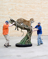 "James Smith and Mike Foss are moving a jaguar from the truck to the expo center. The jaguar made by Phil Soucy, Forest Hart and Mike Vernelson won ""Best of Category, Collective Artists, Lifesize Mammal"""