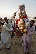 Men rearing a trained dancing horse at the Mallinath Fair at Tilwara  near Balotra, Rajasthan, India.