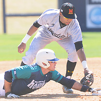 Maryland's Jose Cuas applies a late tag on UNCW's Terence Connelly Sunday March 8, 2015 at Brooks Field. (Jason A. Frizzelle)