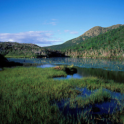 Eagle Lake, below Mt. Lafayette. Near Greenleaf Hut. Bog.  White Mountain N.F., NH