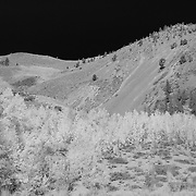Bishop Pack Trailhead Wide View - Infrared Black & White