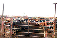Cattle Marketing OQBN Sale Cherokee OK