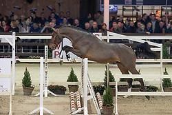 070, Quality van de Noordheuvel<br /> Hengstenkeuring BWP - Lier 2019<br /> © Hippo Foto - Dirk Caremans<br /> 18/01/2019