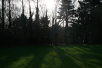 Winter sunlight through trees at a local field in Dublin Ireland