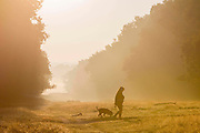 UNITED KINGDOM, London: 02 October 2015 A dog walker walks through Richmond Park this morning as the sun rises on another Autumnal morning. Rick Findler / Story Picture Agency
