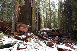Sequoia National Park - Early Fall