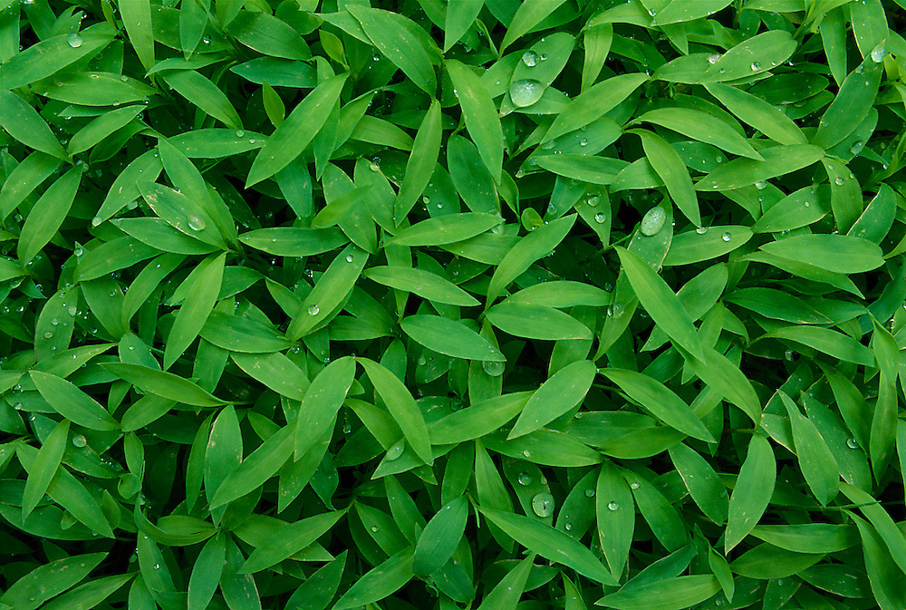 EARTH'S FLOOR - GRASS