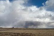 Petrified Wood, Petrified Forest National Park, Holbrook, Arizona, USA
