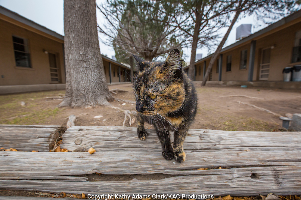A friendly cat greets visitors to the The Chinati Foundation, in Marfa, Texas.  The foundation is a  contemporary art museum featuring the work of founder Donald Judd.