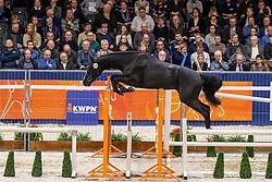 209, Lovekey SR<br /> KWPN Hengstenkeuring - 's Hertogenbosch 2019<br /> © Hippo Foto - Dirk Caremans<br /> 31/01/2019