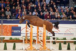 032, Kadance VDL<br /> KWPN Stallionshow - 's Hertogenbosch 2018<br /> © Hippo Foto - Dirk Caremans<br /> 31/01/2018