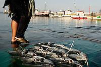 Kalk Bay/Simonstown Generic Photos, Cape Town South Africa Traders cart full of freshly caught  fish in Kalk Bay