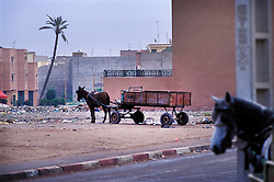 Mules waiting to work, Marrakech, Morocco.
