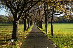View along Boys Brigade Walk on the Meadows park in Edinburgh, Scotland, United Kingdom
