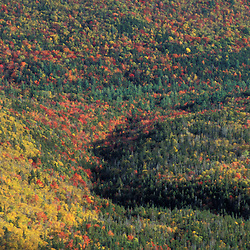 The view from Zeacliff in the White Mountain N.F. Mixed hardwoods and softwoods in the Pemigewasset Wilderness Area. Fall.  Appalachian Trail. Lincoln, NH