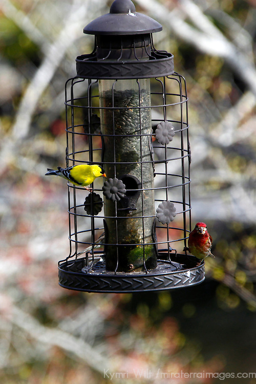 North America, Canada, Nova Scotia, Eastern Shore. Birdfeeder at Liscombe Lodge in Liscombe Mills.