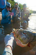 Fly fishing images in Colombia's Llanos Orientales. Fishing for Peacock Bass in remote Colombia via bush plane.