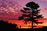 Silhouetted pine tree at sunset, Cumberland Gap National Historic Park, Middlesboro, Kentucky