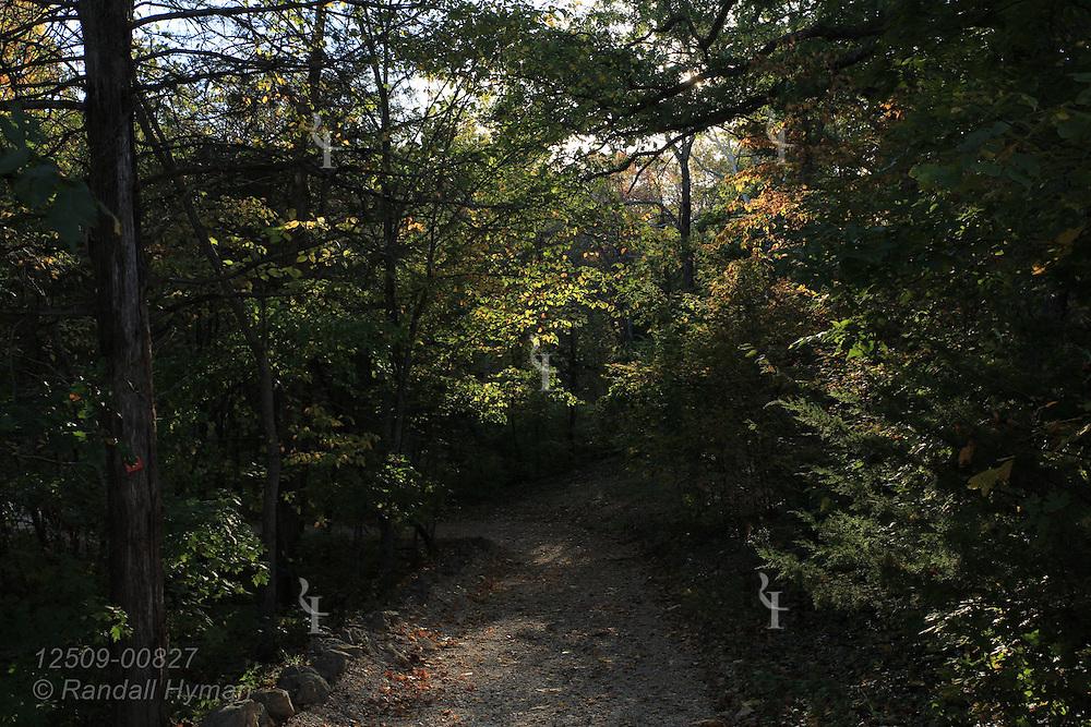 Woodland trail at Dillard Mill State Historic Site near Viburnum, Missouri.