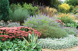 The gravel garden in Autumn with Caryopteris x clandonensis 'Worcester Gold'