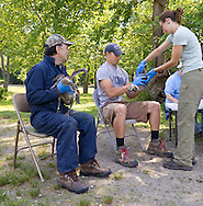 Middletown, New York -  A team from the New York State Department of Environmental Conservation rounds up and then bands Canada geese at Fancher-Davidge Park on June 23, 2014.