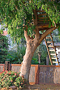 A tree house in a tree