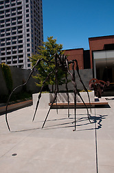 San Francisco Museum of Modern Art, SFMOMA, Rooftop Garden with Louise Boregeois sculpture titled Spider.  Photo copyright Lee Foster.  Photo # casanf103960