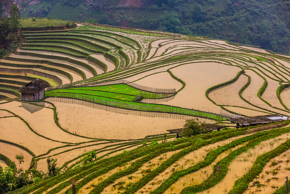 Intricate patterns of the rice terraces in the Muong Hoa Valley near Sapa, Vietnam.